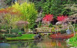 تابلو طبیعت -نمایی زیبا از برکه و جنگل بهاری