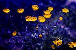 تابلوی زیبا از گلهای زرد و زمینه زیبای بنفش
