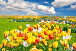 تابلوی زیبا از دشت گلهای رنگارنگ
