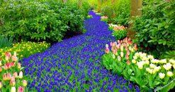 تابلو طبیعت رودخانه ای از گل
