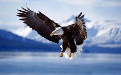 تابلو حیوانات فرود عقاب