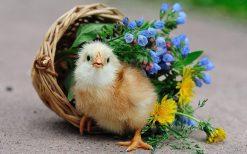 تابلو حیوانات جوجه و گلدان