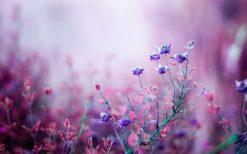 تابلو طبیعت گلهای بنفش زیبا