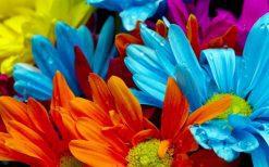 تابلوی زیبا از گلهای رنگارنگ و شبنم1