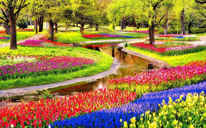 تابلو طبیعت -نمایی زیبا از باغ گلهای رنگارنگ
