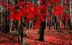تابلو طبیعت -نمایی زیبا از جنگل پاییزی