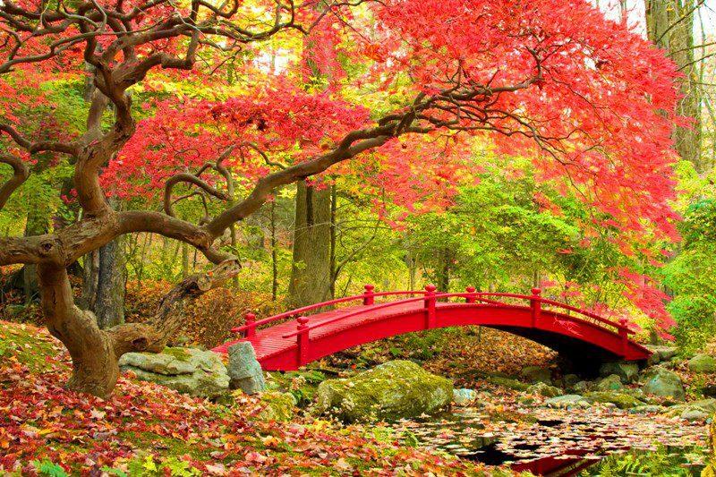 تابلو طبیعت -جنگل پاییزی با پل چوبی قرمز