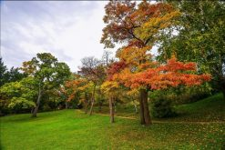 تابلو طبیعت -نمایی زیبا از درختان پاییزی1