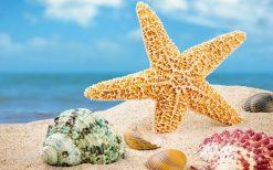 تابلو طبیعت -نمایی زیبا از ستاره دریایی و صدفها
