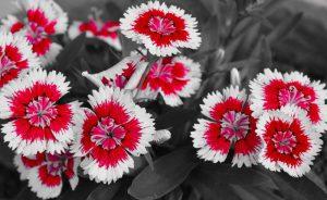 تابلو جدید گل مدرن قرمز