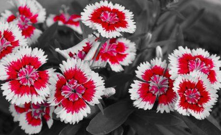 تابلو گل مدرن قرمز