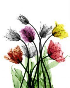 تابلو گلهای رنگی با زمینه سفید