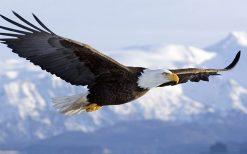 تابلو پرواز عقاب
