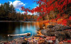 تابلو منظره برگ های پاییزی