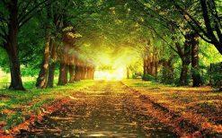 تابلو منظره جاده پاییزی