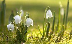 تابلو طبیعت گلهای زیبای بهاری