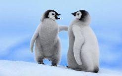 تابلو حیوانات گپ پنگوئن ها