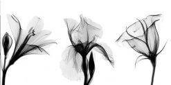 تابلوی زیبا و مدرن سه گل سیاه و سفید1